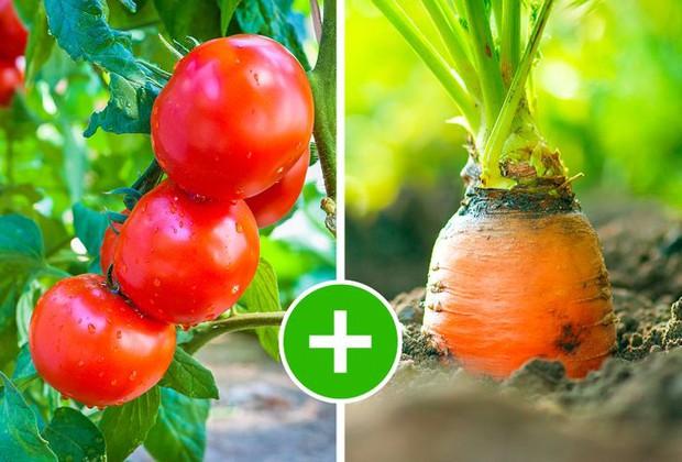 8 bộ đôi rau củ là trời sinh 1 cặp, trồng cạnh nhau không những xanh tốt mà còn giảm sâu bệnh - Ảnh 1.
