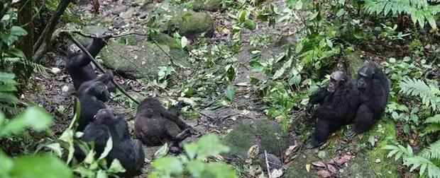 Chiến tranh tinh tinh: Vì tranh giành quyền lực mà những con tinh tinh này đã tổ chức một cuộc chiến đẫm máu kéo dài 4 năm - Ảnh 11.