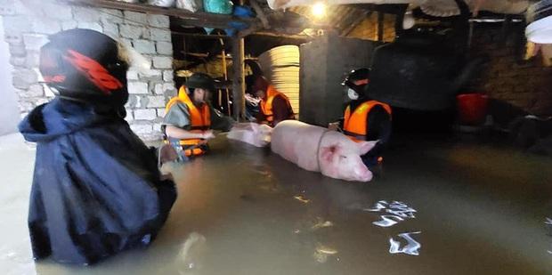 Thủy điện và hồ đập xả lũ, nhiều tuyến quốc lộ và nhà dân ở Nghệ An ngập sâu trong nước  - Ảnh 13.