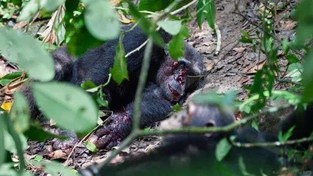 Chiến tranh tinh tinh: Vì tranh giành quyền lực mà những con tinh tinh này đã tổ chức một cuộc chiến đẫm máu kéo dài 4 năm - Ảnh 12.