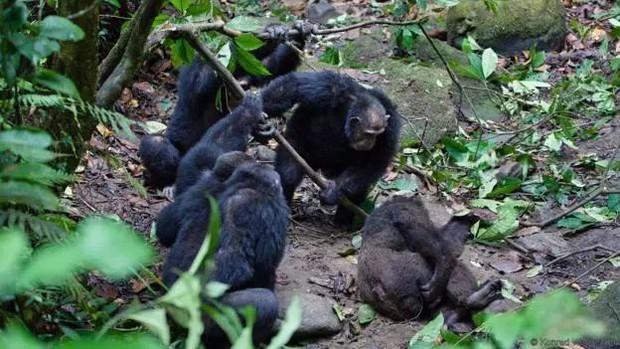 Chiến tranh tinh tinh: Vì tranh giành quyền lực mà những con tinh tinh này đã tổ chức một cuộc chiến đẫm máu kéo dài 4 năm - Ảnh 13.