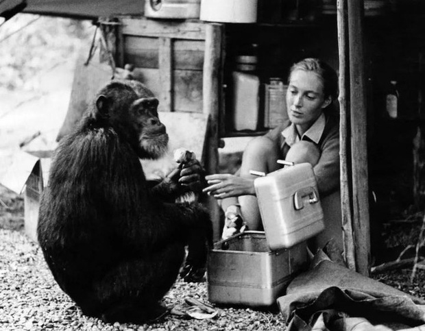 Chiến tranh tinh tinh: Vì tranh giành quyền lực mà những con tinh tinh này đã tổ chức một cuộc chiến đẫm máu kéo dài 4 năm - Ảnh 5.