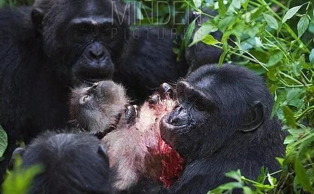 Chiến tranh tinh tinh: Vì tranh giành quyền lực mà những con tinh tinh này đã tổ chức một cuộc chiến đẫm máu kéo dài 4 năm - Ảnh 7.
