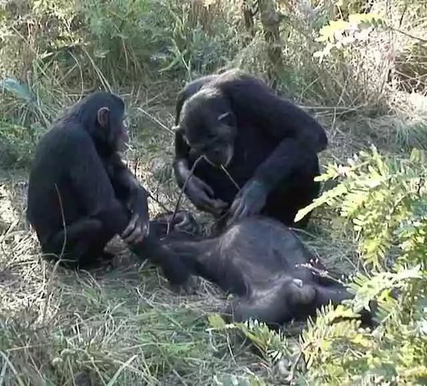 Chiến tranh tinh tinh: Vì tranh giành quyền lực mà những con tinh tinh này đã tổ chức một cuộc chiến đẫm máu kéo dài 4 năm - Ảnh 9.