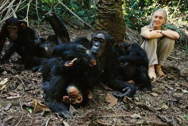 Chiến tranh tinh tinh: Vì tranh giành quyền lực mà những con tinh tinh này đã tổ chức một cuộc chiến đẫm máu kéo dài 4 năm - Ảnh 10.
