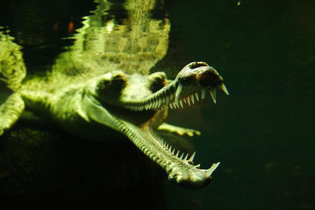 8 loài vật có vẻ ngoài lừa đảo nhất: Trông nguy hiểm mà hiền khô, bất ngờ nhất là loài cuối cùng - Ảnh 9.