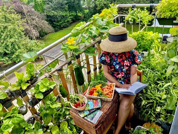 Vườn rau đẹp ngất ngây trên ban công 2.5m2 ở Hà Nội, gia chủ tự tay trồng đủ loại rau củ nhờ kinh nghiệm học trên mạng - Ảnh 1.