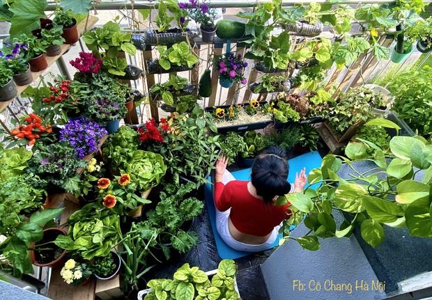 Vườn rau đẹp ngất ngây trên ban công 2.5m2 ở Hà Nội, gia chủ tự tay trồng đủ loại rau củ nhờ kinh nghiệm học trên mạng - Ảnh 2.