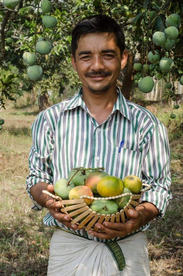 Xoài Ấn Độ tiến vua siêu hiếm: Trông như quả táo, vị như quả chuối, duy nhất một nơi trên thế giới trồng được - Ảnh 1.