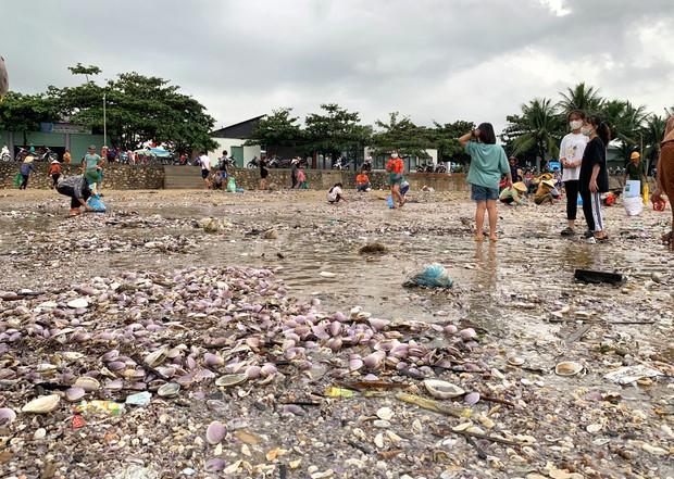 """Nghệ An: """"Lộc biển"""" xuất hiện sau cơn bão, người dân đổ xô đi vớt - Ảnh 1."""