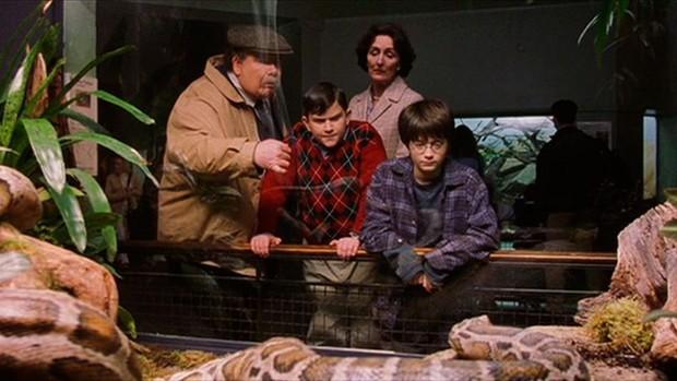 5 giả thuyết Harry Potter điên cuồng, đen tối mà rất logic: Cái chết của Dumbledore được dự đoán trước 5 năm, tuổi thơ Harry có vấn đề? - Ảnh 1.