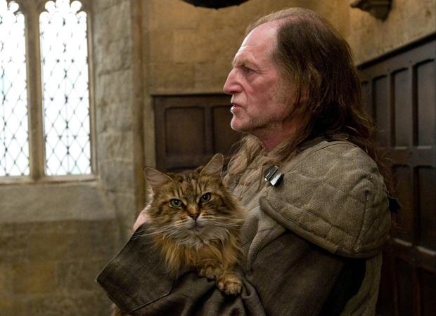 5 giả thuyết Harry Potter điên cuồng, đen tối mà rất logic: Cái chết của Dumbledore được dự đoán trước 5 năm, tuổi thơ Harry có vấn đề? - Ảnh 3.