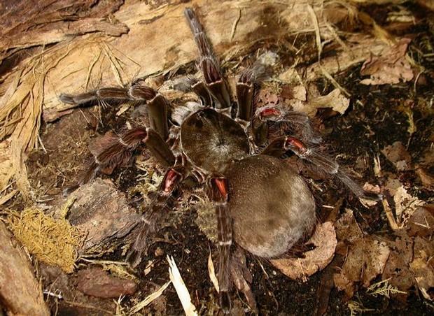 8 loài vật có vẻ ngoài lừa đảo nhất: Trông nguy hiểm mà hiền khô, bất ngờ nhất là loài cuối cùng - Ảnh 7.
