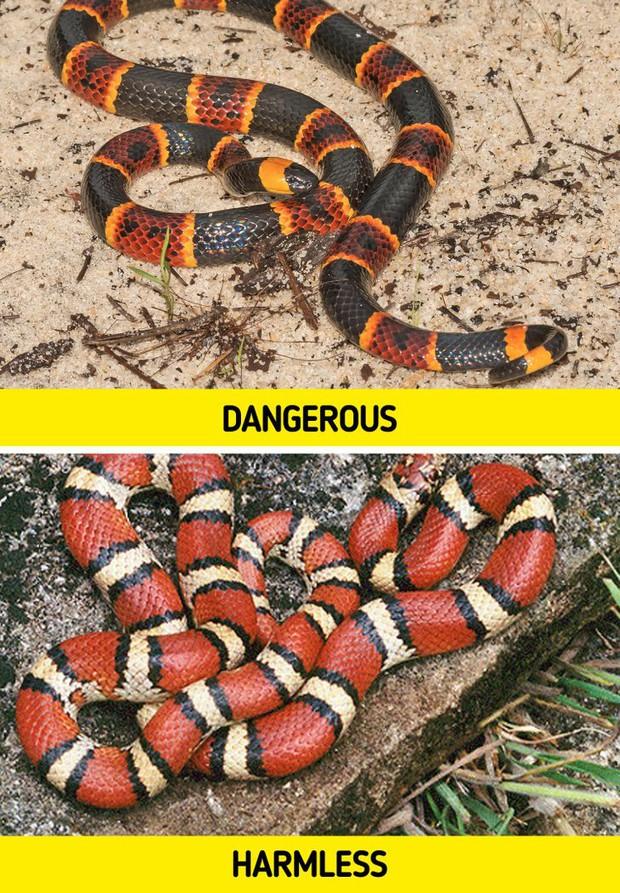 8 loài vật có vẻ ngoài lừa đảo nhất: Trông nguy hiểm mà hiền khô, bất ngờ nhất là loài cuối cùng - Ảnh 3.