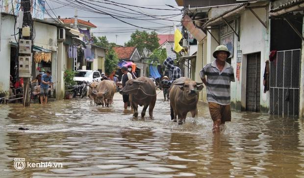 Cận cảnh hơn 3.000 hộ dân ở Nghệ An vẫn bì bõm trong lũ - Ảnh 6.