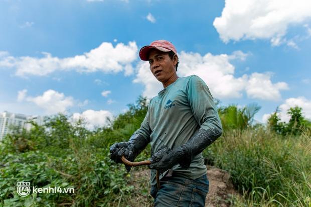 Thất nghiệp suốt 3 tháng do dịch Covid-19, nhóm công nhân mắc kẹt ở Sài Gòn ra đồng gặt lúa thuê, bắt cá mưu sinh - Ảnh 3.