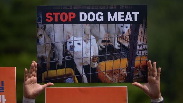 Rộ thông tin Hàn Quốc cấm tiêu thụ thịt chó vì người dân toàn ăn cùng nước mắm và nước ngọt: Sự thật là gì? - Ảnh 2.