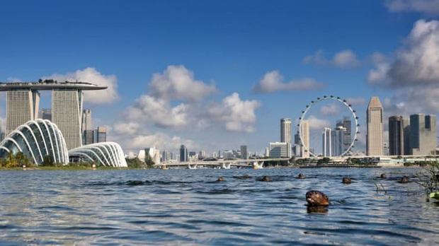 Đông Nam Á tìm cách khôi phục ngành du lịch - Ảnh 4.