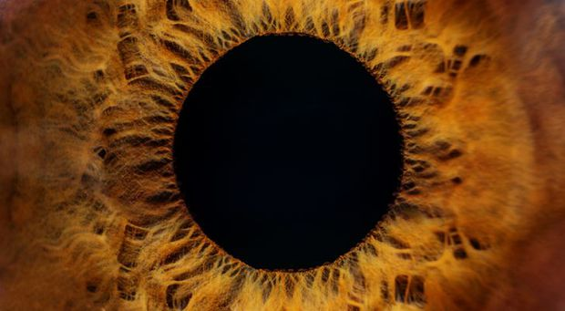 18 hình ảnh phóng to đầy ngoạn mục và đáng sợ của những thứ tầm thường ta thấy mỗi ngày - Ảnh 1.