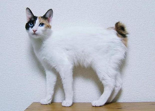 Quan niệm rùng mình về loài mèo của người Nhật Bản: Mèo già bắt đầu đứng thẳng, nói tiếng người và đi giết chủ cũ! - Ảnh 1.