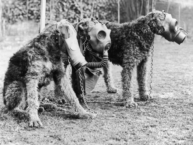 400.000 vật nuôi bị chính chủ thảm sát nhân đạo: Một chương lịch sử tăm tối mà người Anh không bao giờ muốn nhớ lại - Ảnh 1.