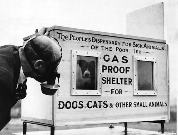 400.000 vật nuôi bị chính chủ thảm sát nhân đạo: Một chương lịch sử tăm tối mà người Anh không bao giờ muốn nhớ lại - Ảnh 2.