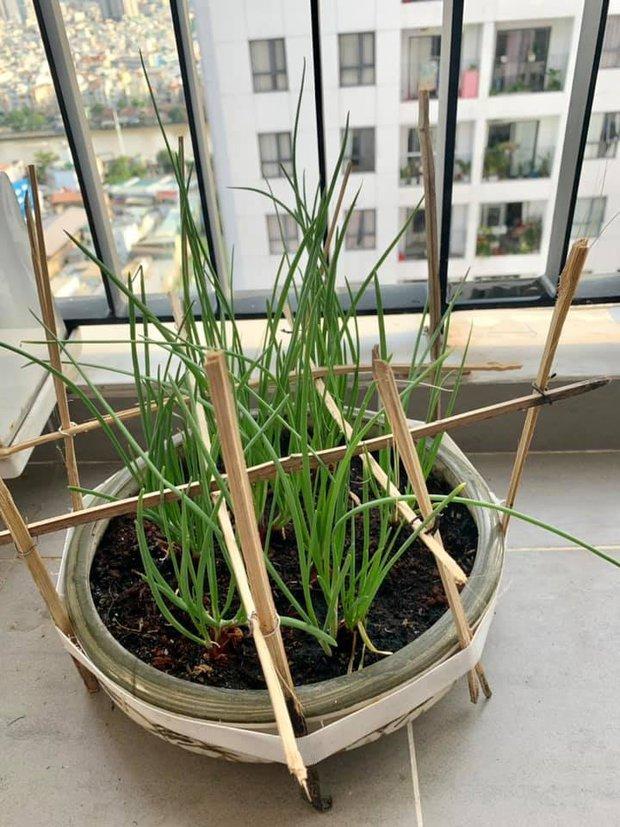 Mẹ bỉm Sài Gòn có tips bảo quản thực phẩm mùa dịch cực khoa học, thú vị nhất là tiết mục phơi rau - Ảnh 4.