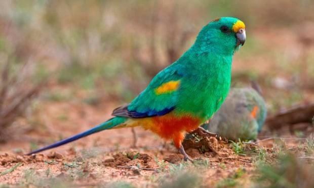 Động vật thay đổi hình dạng để ứng phó với khủng hoảng khí hậu - Ảnh 1.
