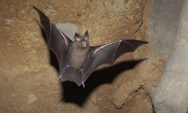 Động vật thay đổi hình dạng để ứng phó với khủng hoảng khí hậu - Ảnh 2.