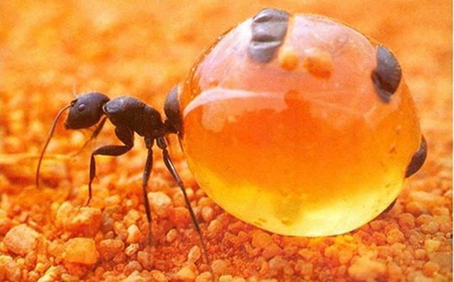 Hình ảnh kiến bò vào nhà xuất hiện trong giấc mộng