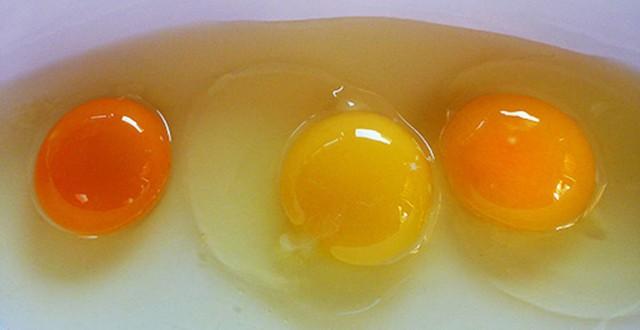 Tại sao cùng là lòng đỏ trứng gà mà quả màu đỏ cam, quả màu vàng nhạt?