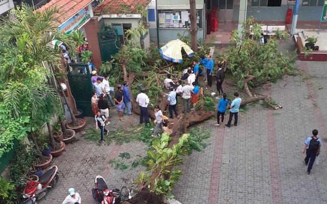 Chùm ảnh: Hiện trường cây phượng bật gốc đè trúng 13 học sinh ...