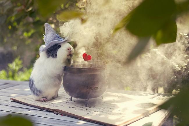 Loài chuột thật đáng ghét nhưng bé chuột lang béo núc ních thì không - Ảnh 1.