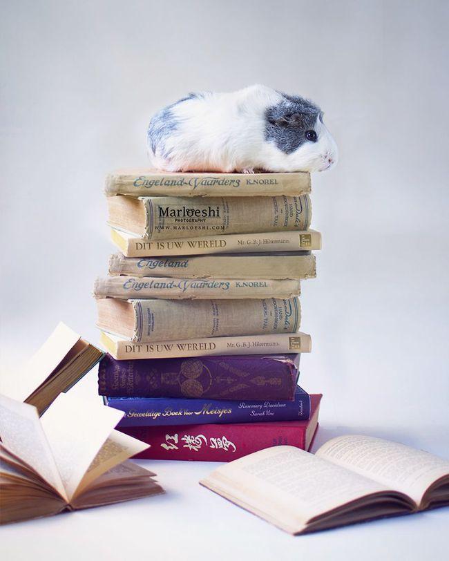 Loài chuột thật đáng ghét nhưng bé chuột lang béo núc ních thì không - Ảnh 2.
