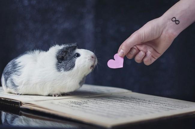 Loài chuột thật đáng ghét nhưng bé chuột lang béo núc ních thì không - Ảnh 3.