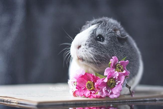 Loài chuột thật đáng ghét nhưng bé chuột lang béo núc ních thì không - Ảnh 6.