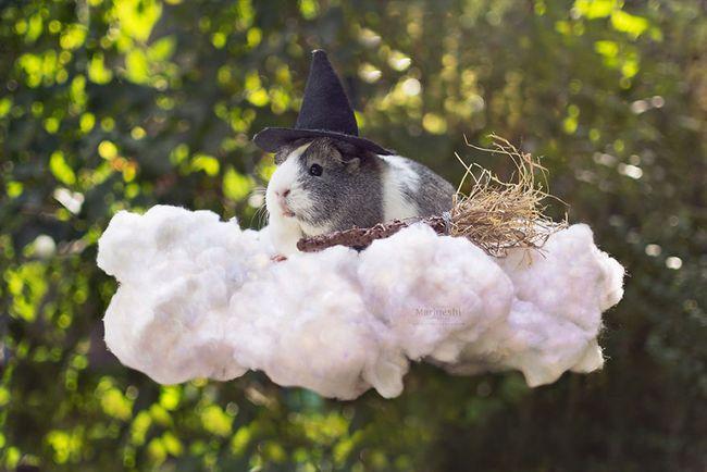 Loài chuột thật đáng ghét nhưng bé chuột lang béo núc ních thì không - Ảnh 7.