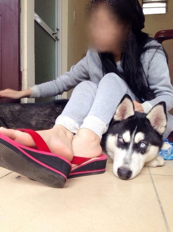 Cô gái cho bạn thân mượn chó cưng Husky để vượt qua stress, bạn bán chó lấy 2 triệu tiêu xài - Ảnh 2.