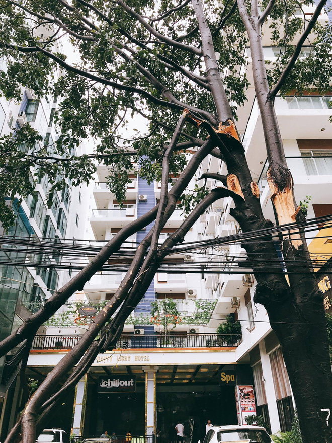 Chùm ảnh: Đường phố Nha Trang tan tác sau khi cơn bão số 12 càn quét - Ảnh 5.