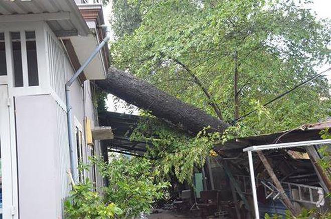 Ảnh hưởng của bão số 14: Nhiều nhà dân tốc mái, cây cổ thụ ngã đổ ở Sài Gòn - Ảnh 1.