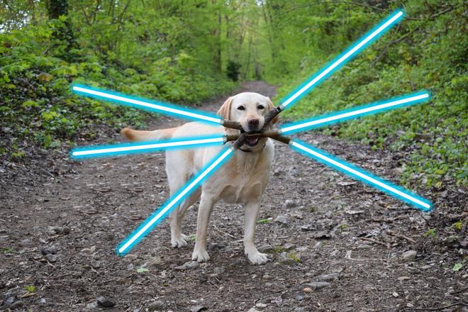 Chú chó ngáo ngơ trở thành nạn nhân của các thánh chế ảnh - Ảnh 2.