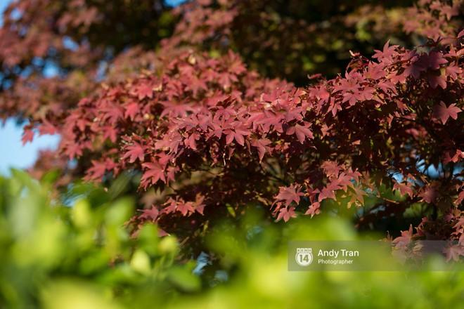 Không phải tự nhiên mà người ta nói: Nhất định phải đến Hàn Quốc một lần vào mùa thu lá vàng - Ảnh 18.