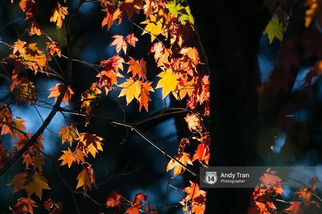Không phải tự nhiên mà người ta nói: Nhất định phải đến Hàn Quốc một lần vào mùa thu lá vàng - Ảnh 16.