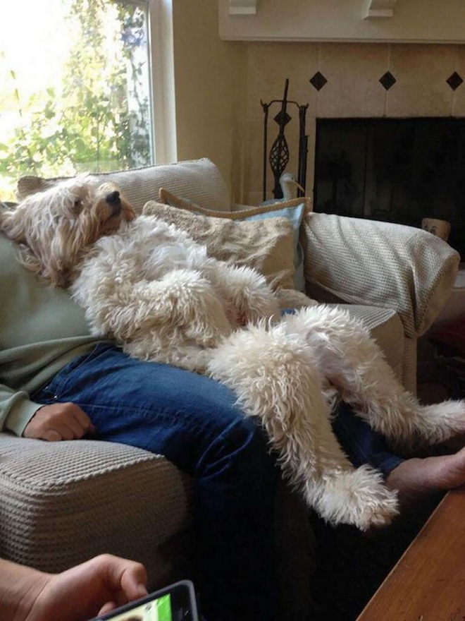 dogs-acting-human-101-59de28f5b75fc700-1