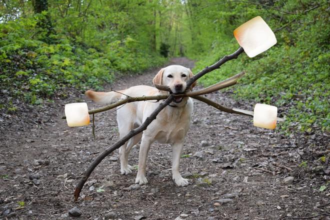 Chú chó ngáo ngơ trở thành nạn nhân của các thánh chế ảnh - Ảnh 4.