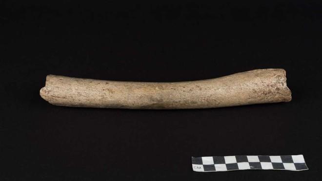 Chỉ vì mẩu xương hóa thạch này, lịch sử con người đang bị buộc phải viết lại - Ảnh 1.