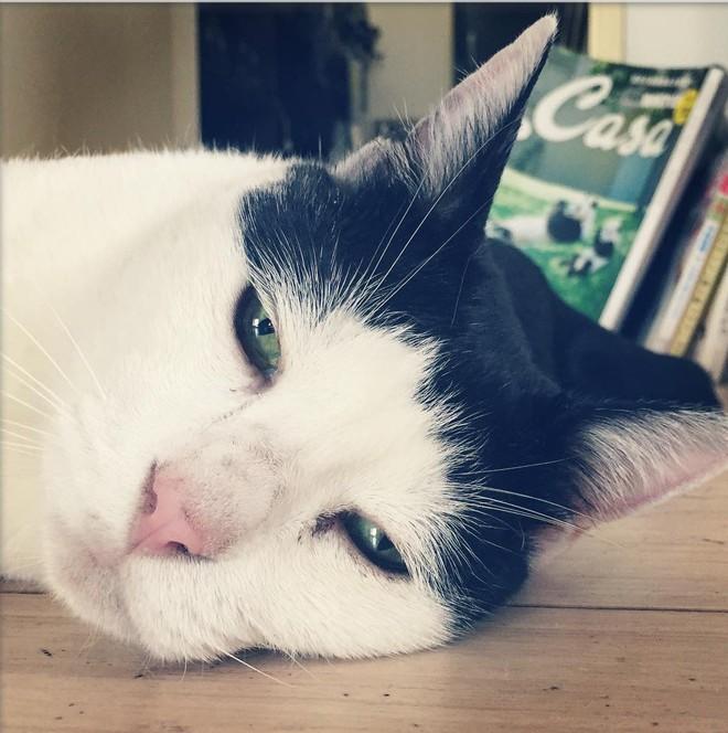 Chú mèo Nhật Bản với gương mặt buồn rười rượi, thương ơi là thương! - Ảnh 15.