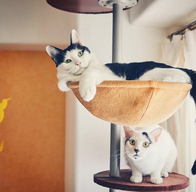 Chú mèo Nhật Bản với gương mặt buồn rười rượi, thương ơi là thương! - Ảnh 5.