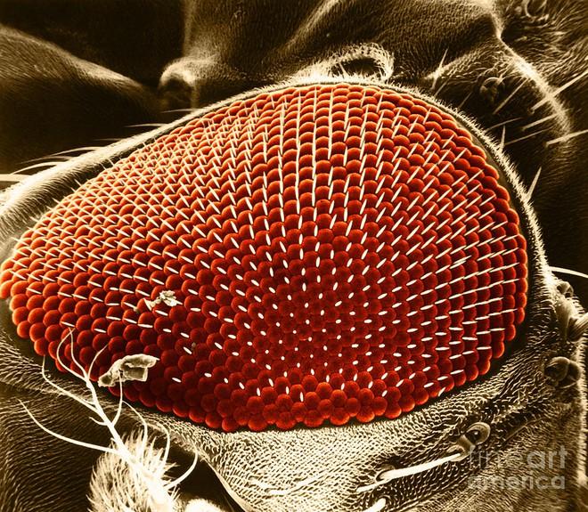 Bé bằng nửa hạt vừng nhưng loài sinh vật này lại đóng góp lớn trong nền nghiên cứu khoa học - Ảnh 2.