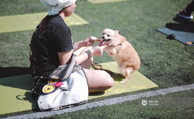 Lễ hội thể thao dành cho chủ và thú cưng độc đáo, đáng yêu nhất Hà Nội! - Ảnh 14.